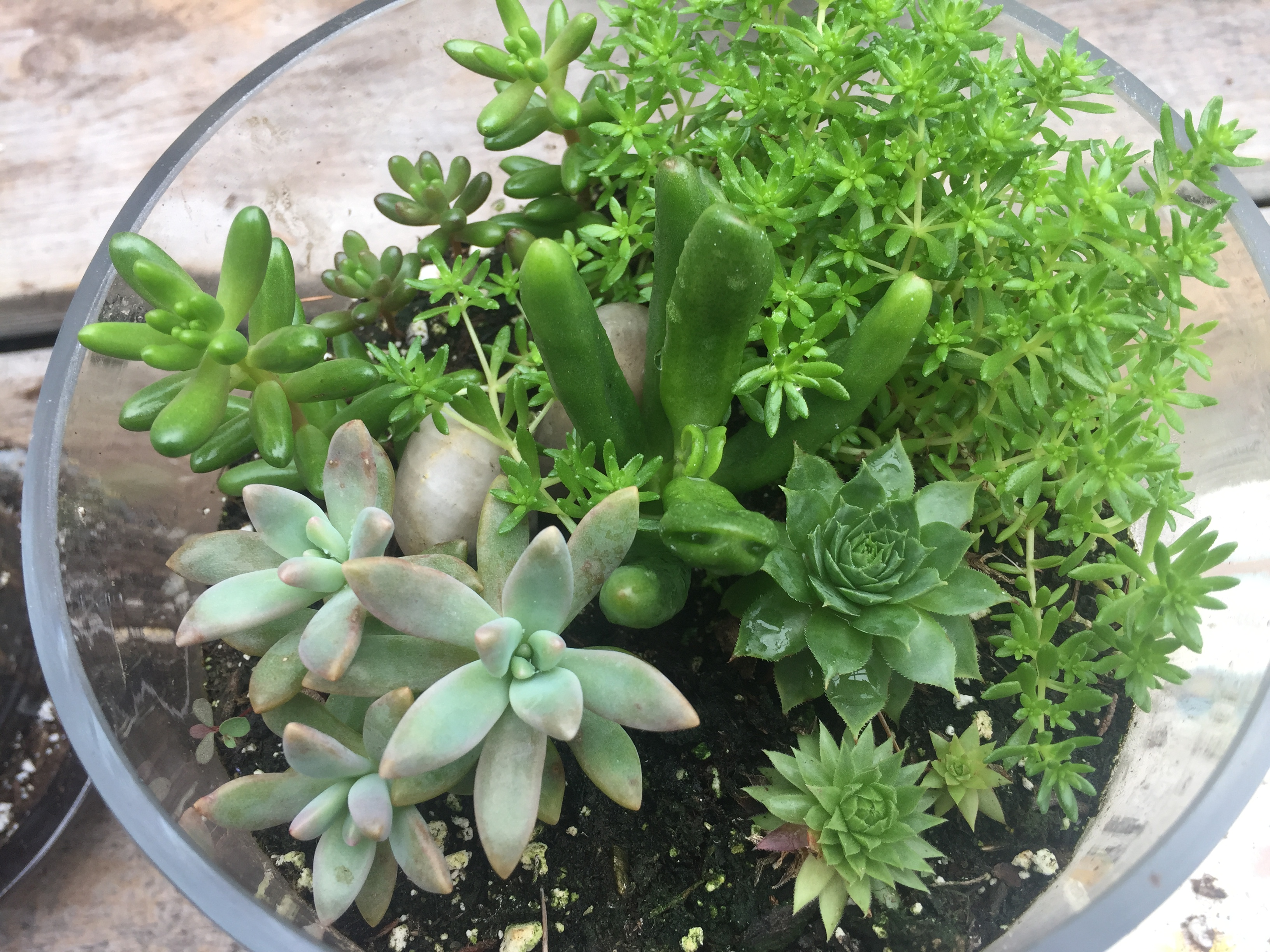 This image has an empty alt attribute; its file name is skydog-succulents10.6d-1.jpg